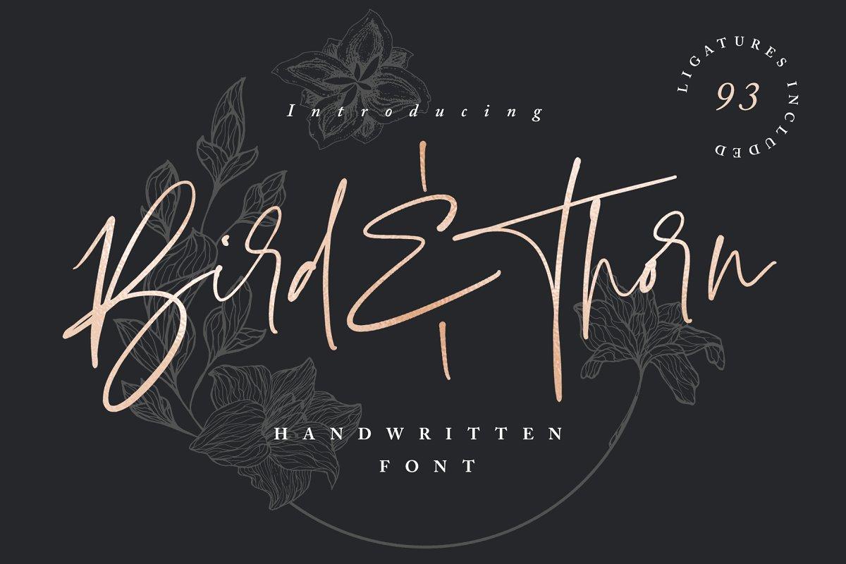 Bird & Thorn signature font by Set Sail Studios